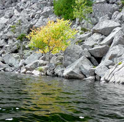Plants growing out of rock Echo Lake