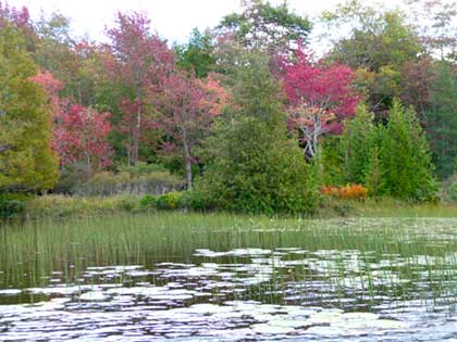Beginning of red fall colors Seal Cove Pond
