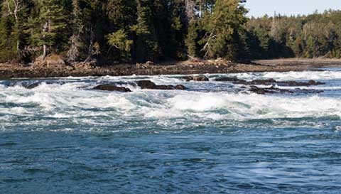 Reversing falls at low tide