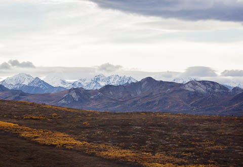 View of mountains in Denali National Park
