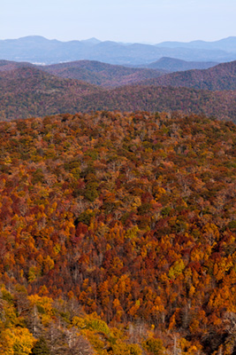 Fall colors from the Blue Ridge Parkway