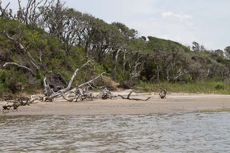 Beach on Island in Bogue Sound