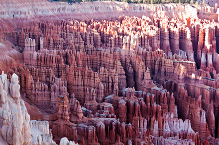 Bryce canyon at early sunset rocks are pink.