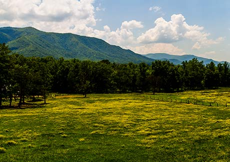 Cades Cove in May