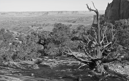 Black and White View of Canyonlands National Park