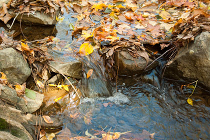 Fall leaves in the creek