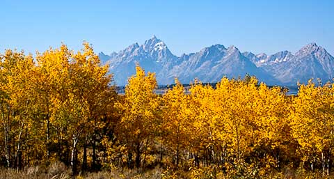 Fall Colors at Jackson Lake Grand Teton National Park
