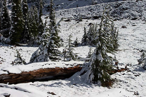 Snow in Lassen National Park