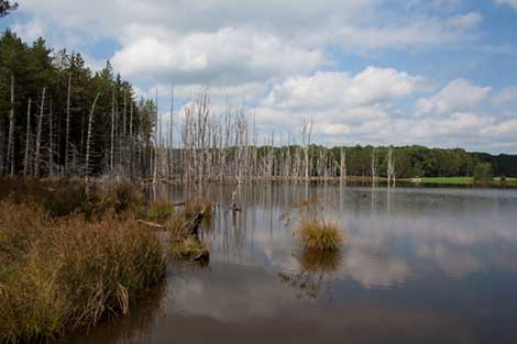 Small pond in Pennsylvania water in foreground and trees in background