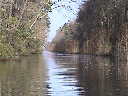 Canal leading to Lake Mattamuskeet