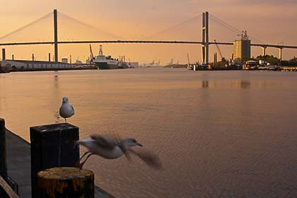 Sea gull with bridge in background