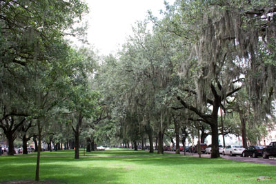Trees in Savannah