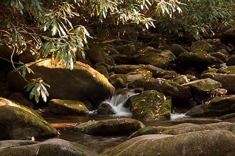 Small stream in Great Smoky Mountain National Park