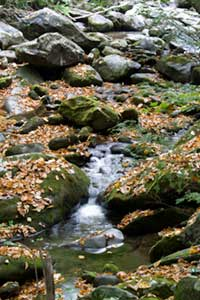 Small stream and fall leaves