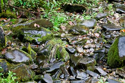 Small Pebbles is small stream