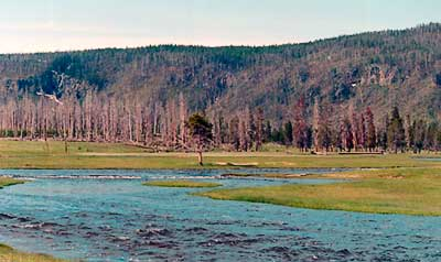 Firehole river with evidence of 1988 fire